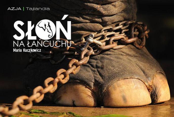 Słoń na łańcuchu