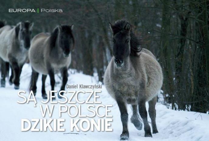 Są jeszcze w Polsce dzikie konie