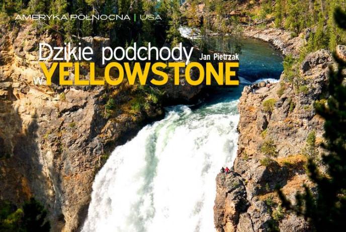 Dzikie podchody w Yellowstone