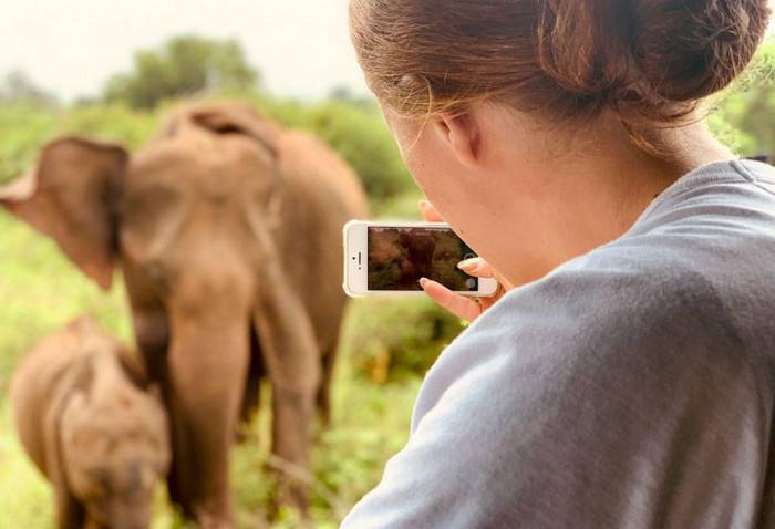 Słonie w smartfonie