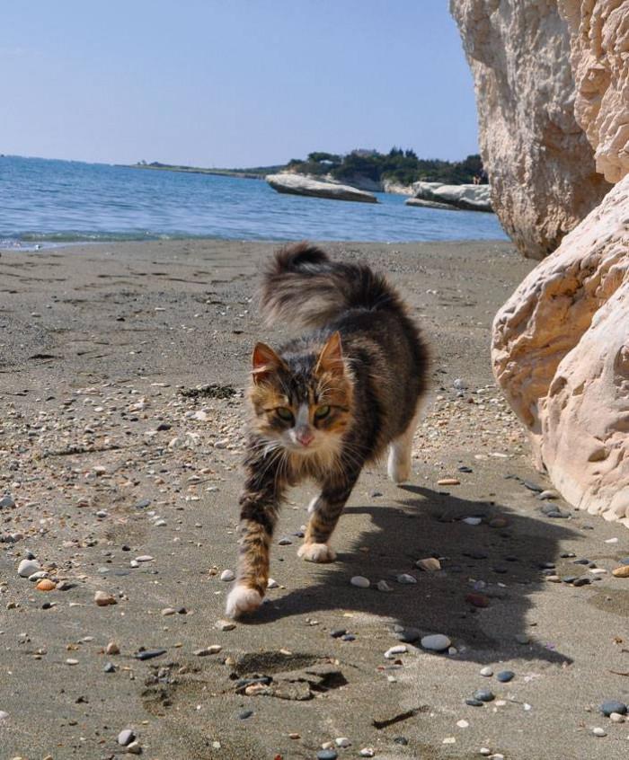 Kicia z Kitą | Cypr
