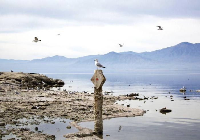 Salton Sea / USA