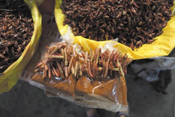 Zjedz larwę / Meksyk